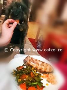 alimebte bune pentru caini: fasole, morcov, somon